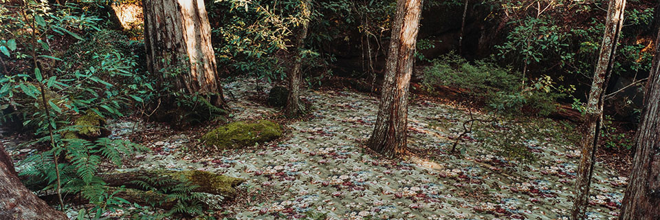 """Rosemary Laing, """"groundspeed (Rose Petal) #17"""", 2001, Chromogenic color print, Alexander A. Goldfarb Contemporary Art Acquisition Fund, 2006.26.1, Wadsworth Atheneum Museum of Art_An Artificial Wilderness: The Landscape in Contemporary Photography exhibition web header 960 x 320"""